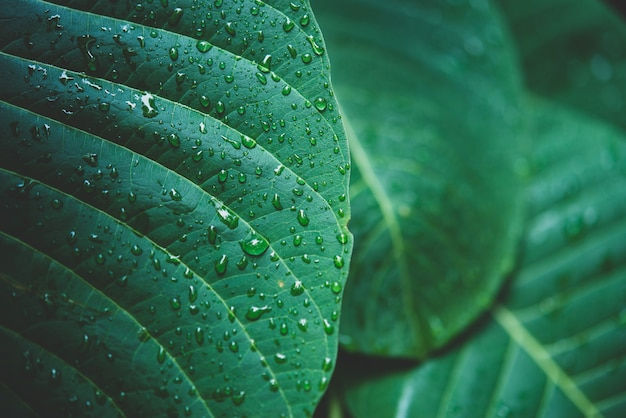 Rain water on a green leaf macro. Free Photo