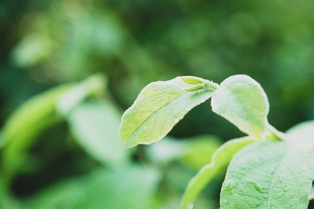 Rain water on a green leaf macro. Free Photo