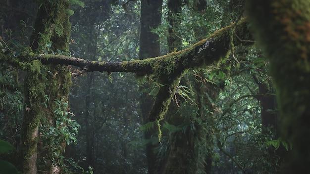 Rainforest in doi inthanon national park , thailand Premium Photo