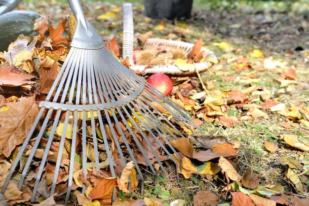 Rake in leaves on garden Premium Photo