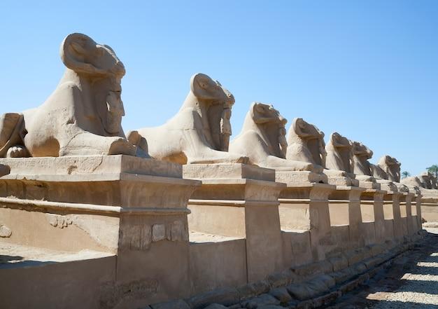 Sifone a testa di ram nel tempio di karnak Foto Gratuite