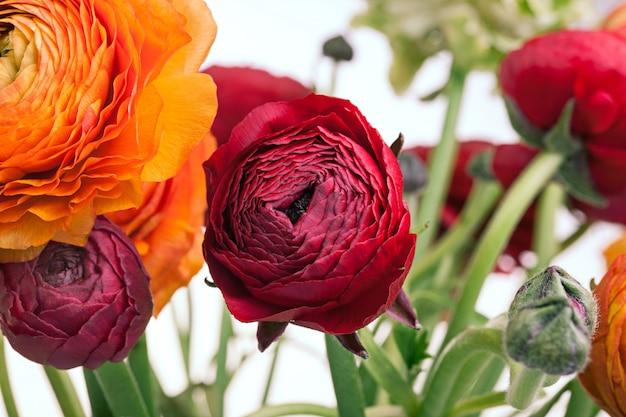 Ранункулюс букет из красных цветов на белом фоне. поздравительная открытка Бесплатные Фотографии