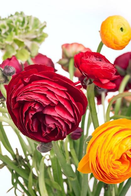 Ранункулюс букет красных цветов на белой стене Бесплатные Фотографии