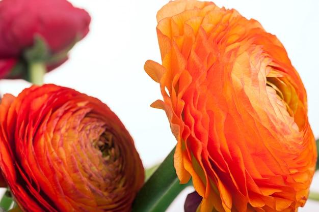 Ранункулюс букет из красных цветов Бесплатные Фотографии