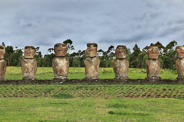 Rapa nui. статуя моаи в аху акиви на острове пасхи, чили Premium Фотографии