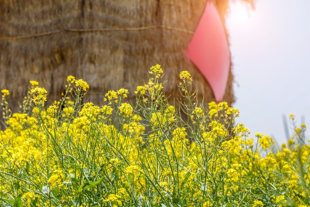 Rape flower field and granary Premium Photo