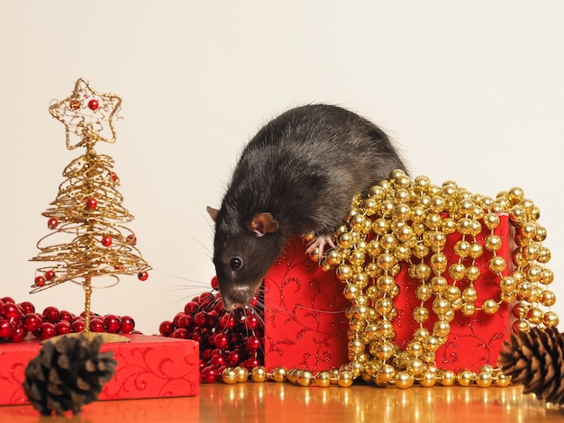 Rat dumbo on box with new year's decor, symbol of the year Premium Photo