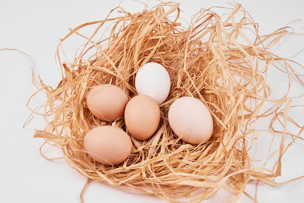 Raw eggs in bird nest on white surface. Free Photo
