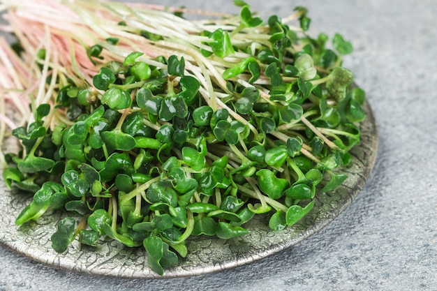 Raw green organic radish or daikon microgreens Premium Photo