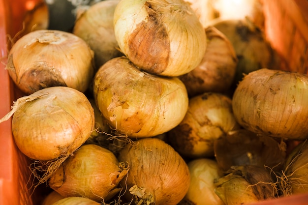 Raw healthy onion in plastic crate for sale Free Photo