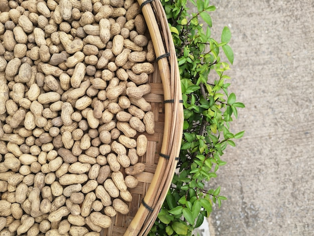 Raw peanuts sun bath to dry. to be processed into peanut butter. Premium Photo