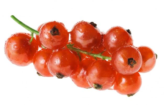 Сырая красная смородина с каплями воды на веточке изолировать на белом фоне Premium Фотографии