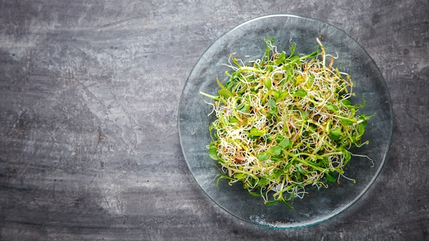Raw sprouts microgreens. snack on summer. Premium Photo