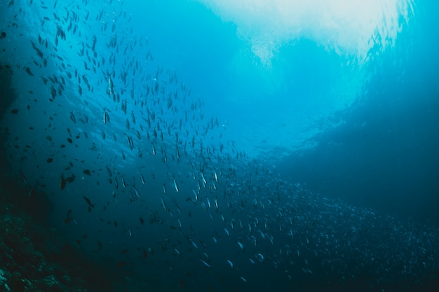 Raggi di luce solare che brillano in mare, shcool di pesci, vi Foto Gratuite