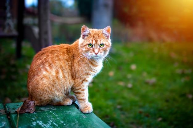 リードヘッド猫が座っています 無料写真