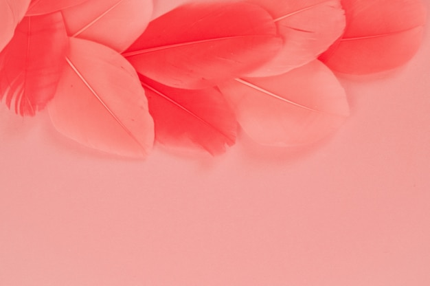 Real feathers trend color pink coral Premium Photo