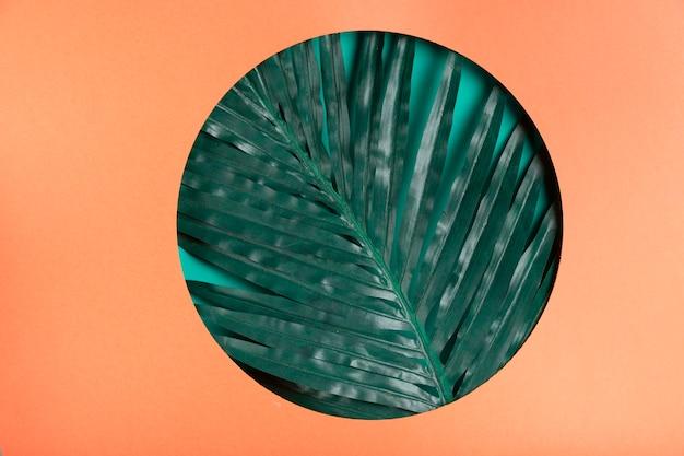 紙の円の中の現実的な葉 無料写真