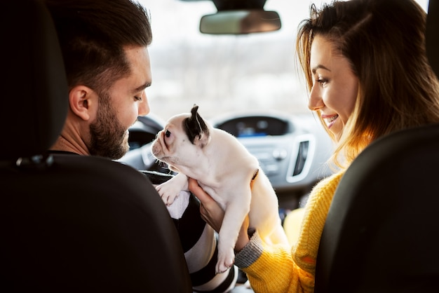 Rear view in a car of attractive young smiling love couple playing with their adorable little dog. Premium Photo