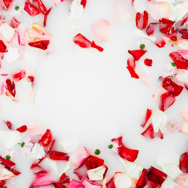 Red and white flower petals floating on milk photo free download red and white flower petals floating on milk free photo mightylinksfo