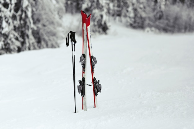 Red and white skis put in the snow in forest  Free Photo