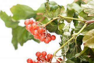熟した赤い果実 無料写真