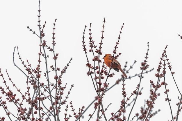 나뭇 가지에 빨간 새 무료 사진