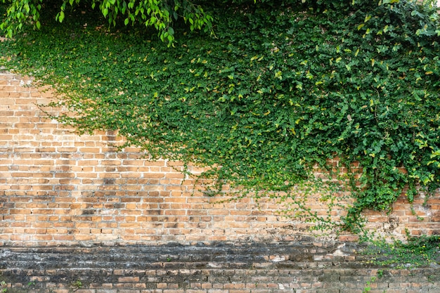 Red brick wall texture with green climber plant for background and cop Premium Photo