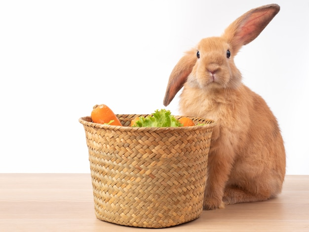 Red-brown rabbit and the basket with lettuce and carrot on wooden table. rabbit like to eat vegetables. Premium Photo