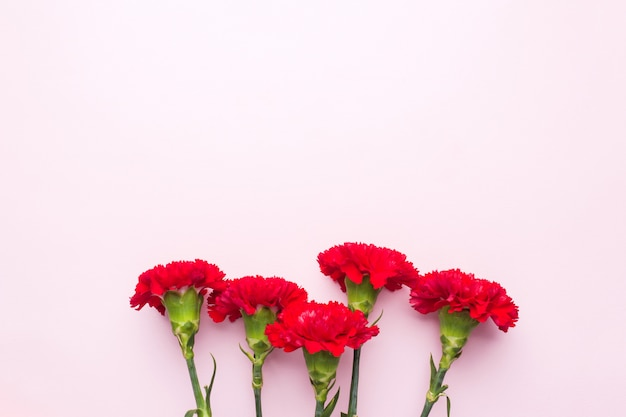 Red carnations on pink background with copy space. mother's day card, valentine's day. Premium Photo