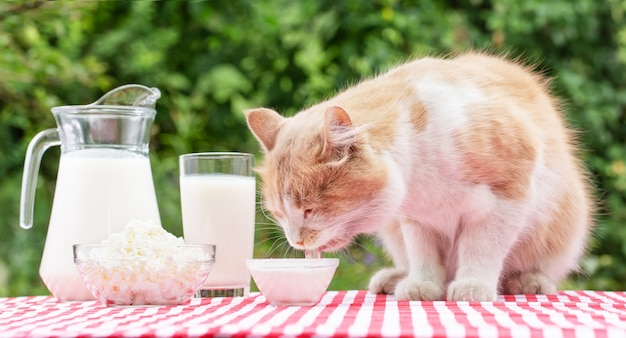 Cat and milk don't match