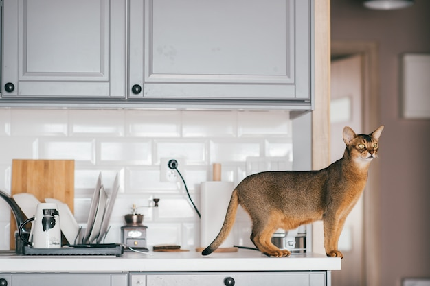 Red cat standing on table with kitechenware. Premium Photo