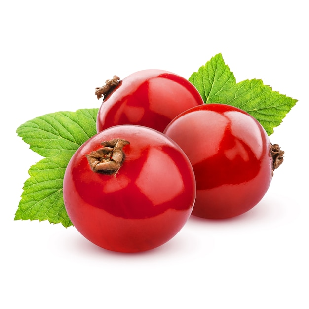 Red currant isolated on white with clipping path Premium Photo