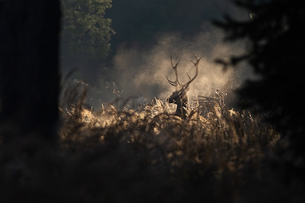 Red deer stag in morning autumn mist Premium Photo