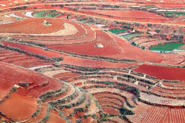 Red earth growing vegetables in dong chuan, china Premium Photo