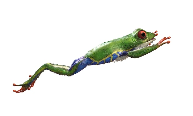 Red-eyed amazon tree frog a tropical rain forest animal with clipping path Premium Photo