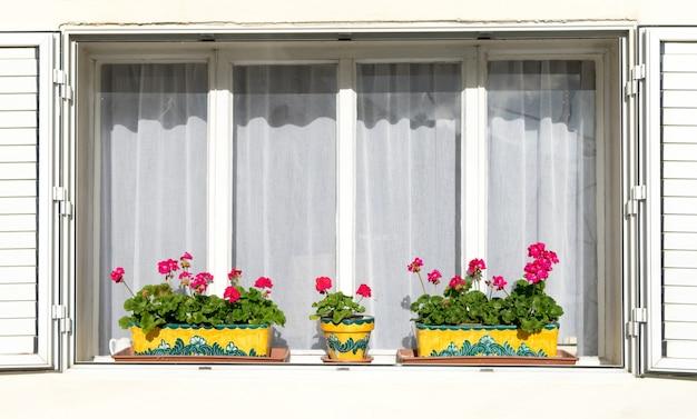 白い窓辺に赤い花 Premium写真