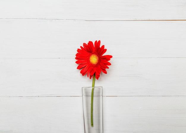 Red gerbera flower in glass vase Free Photo