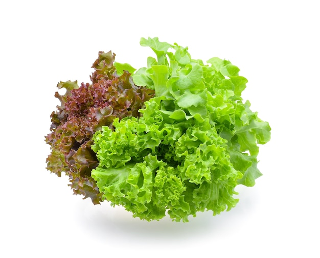 Red and green oak lettuce on white background Premium Photo