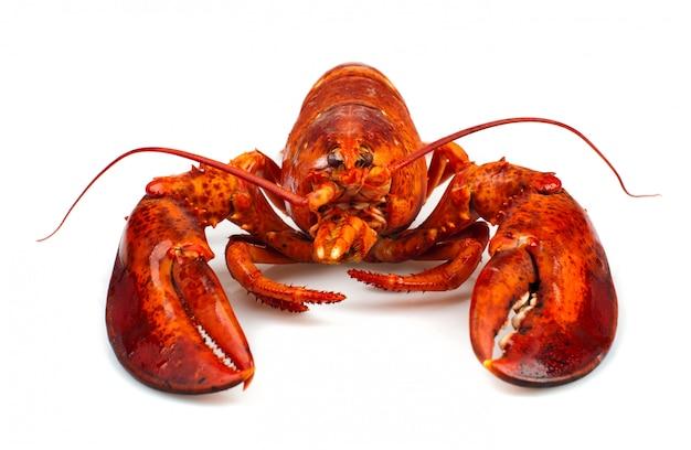 Red lobster Premium Photo