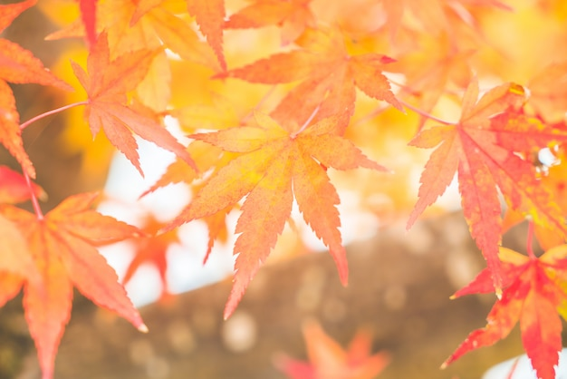 Red maple leaf Free Photo