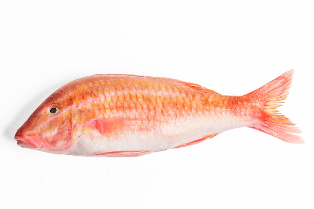 Red mullet fish isolated on white background photo free for Eating mullet fish