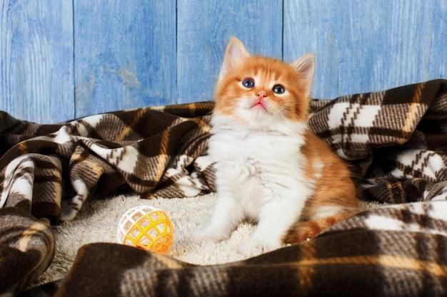 Красно-оранжевый котенок на синем дереве Premium Фотографии