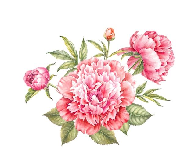 Red peony flower watercolor illustration. Premium Photo