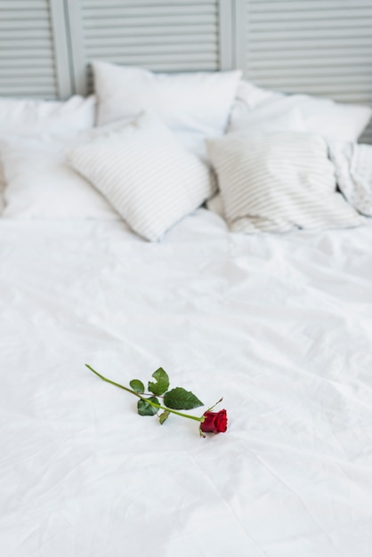 Red rose on bed with white linen Free Photo