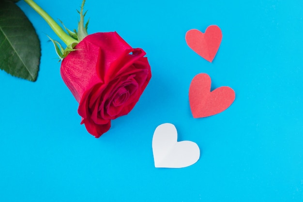 Red rose on blue background with heart. Premium Photo