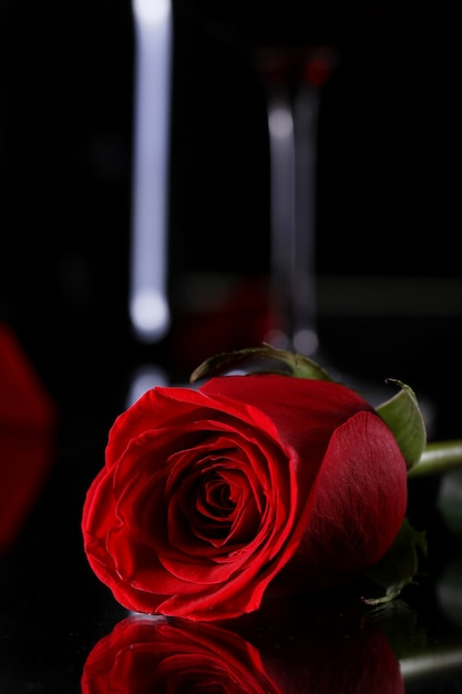 Red rose in darkness Free Photo