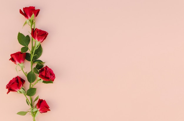 Red rose flowers in flat lay Free Photo