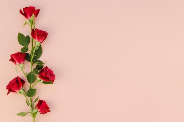 Красные розы цветы в плоской планировке Premium Фотографии