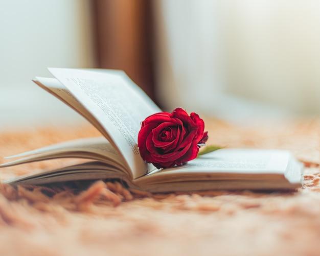 開いた本の中の赤いバラ 無料写真