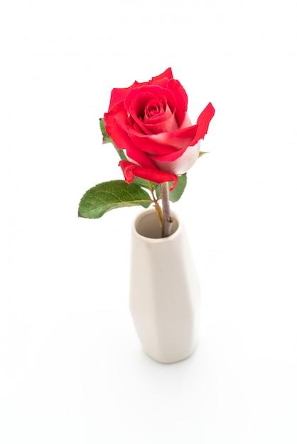 Красная роза на белом фоне Premium Фотографии